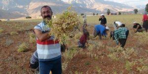 OVACIK'TAN HOPA'YA YARDIM ELİ