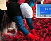 CANIM ÜLKEM! TRUMP SEÇİM KAZANDI,ANTALYA'LI TURP DAĞITTI